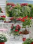 Red and white balcony with Argyranthemum (Marguerite), Dahlia (Dahlia)