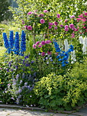 Summer bed with roses and larkspur
