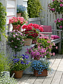 Flower staircase Petunia, Pelargonium, Verbena Estrella