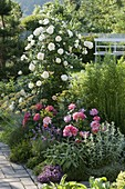 Summer bed with roses and herbs
