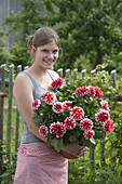 Young woman with Dahlia 'Duet' (jewelry dahlia) in the pot