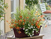 Balcony box planted with orange-white summer flowers