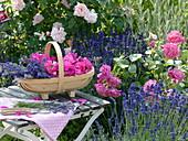 Basket of freshly cut lavender 'Hidcote Blue'