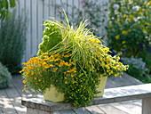Tagetes tenuifolia (Marigold), Calibrachoa 'Capri Gold'