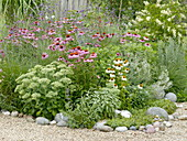 Perennial grasses bed with coneflower