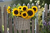 Sunflowers as a welcome at the garden gate