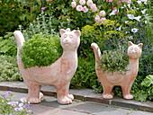 Terracotta cats planted with mini basil 'Picolino'