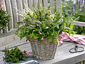 Various mints (Mentha) as a herb bouquet in the basket