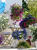 Petunia balcony, Petunia in different colors, Nerium