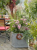 Anemone japonica 'Pretty Lady Emily', Pennisetum 'Cassian'