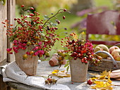 Rosehips and Euonymus in terracotta pots
