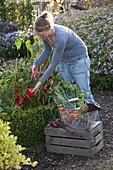 Vegetables harvest in the farm garden