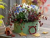 Viola cornuta Sorbet 'Blueberry Cream', Callisto 'White'