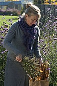 Woman reaping Nigella (virgin in the countryside) seeds
