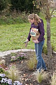 Plant perennial flowerbed with grasses and tulip bulbs