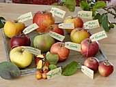 Apples with name tags on wooden tray