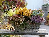 Herbstzauber im Korb mit Chrysanthemum 'Kipli' (Herbstchrysanthemen)