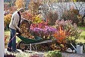 Autumn bed with shrubs and perennials