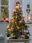 Kleiner, gebundener Weihnachtsbaum aus Abies (Nordmanntanne)