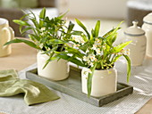Oncidium Tiny Twinkle 'Fragrance Fantasy' (Orchid)