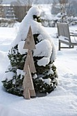 Snow-covered Picea glauca 'Conica' (Canadian spruce)