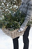 Freshly cut greens for Christmas floristry in basket