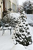 Buxus, ball and cone, beside house entrance, chair