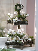 Star shelves christmassy with cyclamen