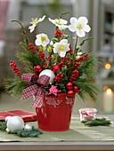 Weihnachtlicher Strauß : Helleborus 'Verboom Beauty' (Christrosen), Pinus