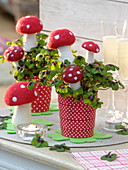 Oxalis deppei (lucky clover) decorated with toadstools made of felt