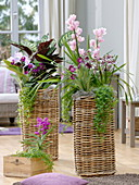 High baskets planted with orchids and basket marant