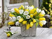 White-yellow Tulipa bouquet 'Royal Virgin', 'Strong Gold'