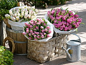 Baskets with Tulipa 'Dynasty' pink, 'Carneval de Nice' red-white, 'Dior'