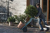 Transport potted plants with a sack truck