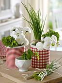 Schnittlauch (Allium schoenoprasum), Petersilie (Petroselinum) und Bellis