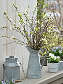 Tin can with flowering branches of Prunus