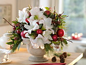 Christmas Bouquet with Hippeastrum 'Picotee' (Amaryllis), Pinus