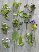Wild Herb Tableau, Stellaria, Urtica, Lamium