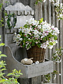 Malus (apple) branches in basket vase on wall board
