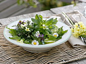 Salad with wild herbs, bellis, primula
