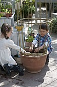 Children sowing fire beans in terracotta tubs