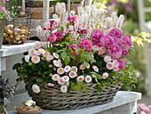 Basket with Rosa Ranunculus, Bellis, Tiarella