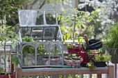 Planting table with mini greenhouse on balcony
