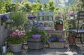 Spring balcony with Aquilegia, Viola cornuta and wittrockiana