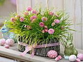 Decorate wheatgrass in bark box with bellis