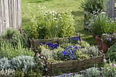 Herb bed with enclosure made of willow wicker fences