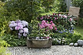Fountain with stone trough, Rhododendron yakushimanum 'Milano'