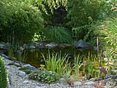 Pond with goldfish, Sinarundinaria and Phyllostachys aurea