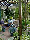 Terrace with wooden pergola, seating, Solanum rantonnetii