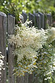 Elderberry and chamomile flowers
